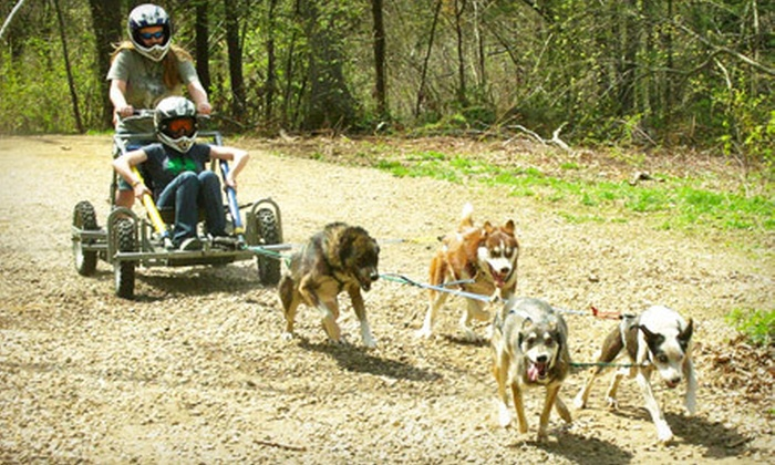 Northern Exposure Outfitters - Brookfield: Kennel Tour, Three Days of Adventure Day Camp, or Week of ADventure Day Camp at Northern Exposure Outfitters in Brookfield (Up to 57% Off)