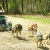 Up to 57% Off Dogsled Tours & Camps in Brookfield