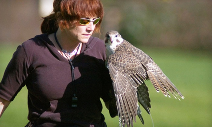 West Coast Falconry - Washington Trail: Owl Encounter or Falconry Lessons for One or Two West Coast Falconry in Marysville (Up to 51% Off)