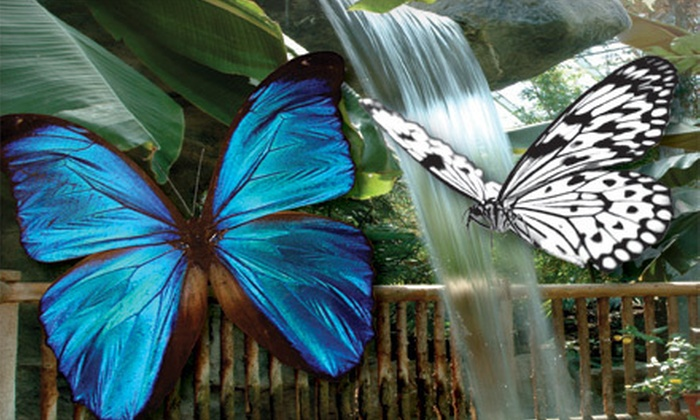 Cambridge Butterfly Conservatory - Cambridge Butterfly Conservatory: $20 for Four General Admission Tickets to the Cambridge Butterfly Conservatory (Up to $52 Value)