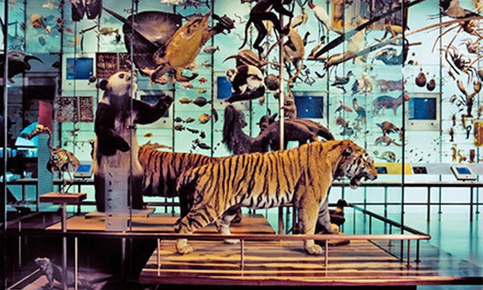 Groupon Museum Of Natural History New York