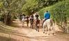Passeggiata o lezioni a cavallo