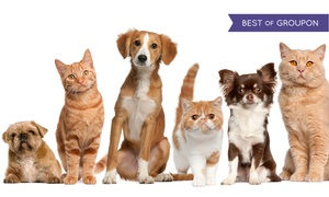 GQ Animal Clinic: Wellness Exam and Vaccines for Dogs and Cats at GQ Animal Clinic (78% Off)