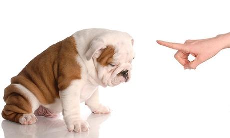 Clase de adiestramiento canino a domicilio con 1 o 3 clases prácticas desde 19 € Oferta en Groupon
