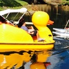 $34 for $65 Worth of One Hour Paddle Boat Rental at Aquatic Sport and Bicycles