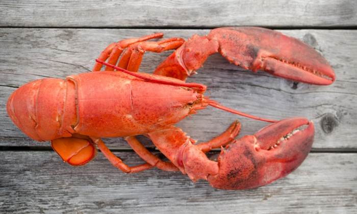 Live Maine Lobsters - GetMaineLobster.com | Groupon