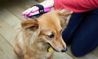 Basic or Regular Grooming for a Dog or Cat at Royal Paws Home Pets Nursery