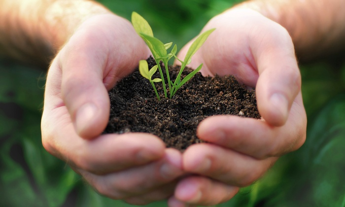 Plant by Design - Richmond: $79 for Rain-Garden Design Package from Plant by Design ($275 value)