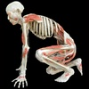 """""""Bodies Revealed"""" – Up to 72% Off Exhibit Visits"""