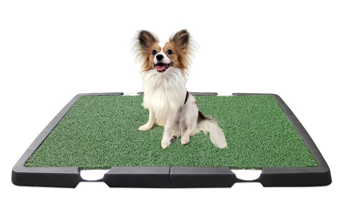 Spotty Indoor Dog Potty | Groupon