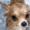 45% Off Pet Care