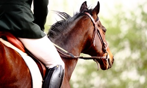 Centennial Stables: $220 for Four 30-Minute Private Horse Riding Lessons at Centennial Stables (Up to $440 Value)