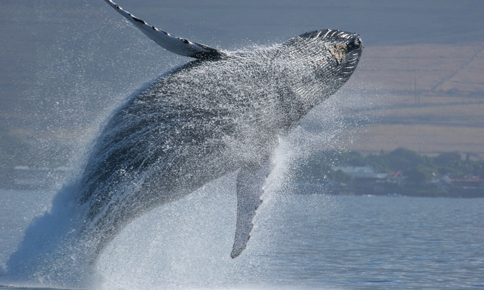 Capt. John Boats - Captain John Whale Watching and Fishing: $56 for a Whale-Watching Tour for Two from Capt. John Boats (Up to $94 Value)