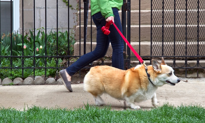 Precious Paws - Honolulu: One or Three 30-Minute Dog-Walking Sessions from Precious Paws (Up to 55% Off)
