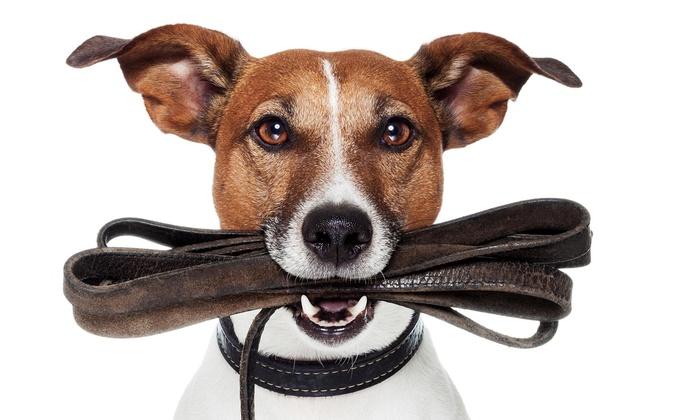 Le Traiteur Chien Pet Care - Little Rock: Two Days of Pet Sitting Services from Le Traiteur Chien Pet Care (53% Off)