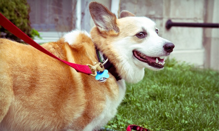 Cameo's Pet Salon and Doggie Day Care - San Buenaventura (Ventura): $13 for One Day of Doggy Daycare at Cameo's Pet Salon and Doggie Day Care ($27 Value)