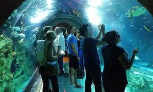 Sea Life Arizona Aquarium: Admission to Sea Life Arizona Aquarium (28% Off). Three Options Available.