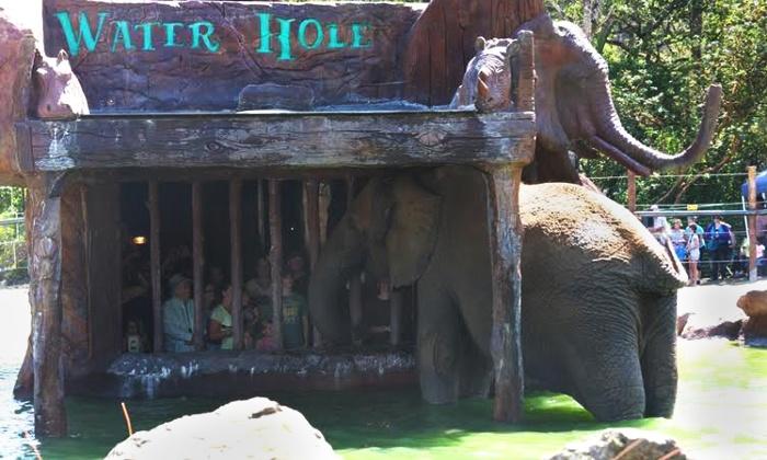 Wildlife Safari Encounters - Wildlife Safari: Elephant Waterhole Tour or Elebubbles Elephant Bath Encounter at Wildlife Safari (Up to 50% Off)