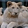 Up to 47% Off at Safari Niagara