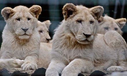$16 for One-Day All-Inclusive Animal-Park Admission at Safari Niagara (Up to $29.95 Value)