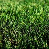 75% Off Weed and Crabgrass Treatment with Optional Fertilizer