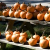 Up to 56% Off Pumpkin Festival at Chris' Farm Stand