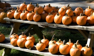 Chris' Farm Stand: Great Family Fall Fun Festival at Chris' Farm Stand for Two or Four (Up to 56% Off)