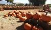 Up to 33% Off Maize Maze Visit at Rio Grande Community Farm