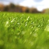71% Off Broad-Leaf Weed Control from Weed Man