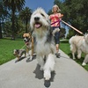 61% Off Dog-Walking Sessions