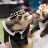 New York Pet Expo – $5 for Admission