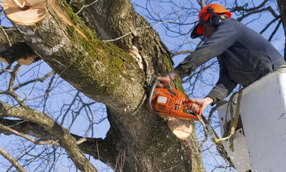 Up to 55% Off Tree Trimming Service - Dallas
