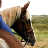 50% Off Horseback Trail Ride or Lessons
