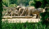 Tageseintritt für 1 Erwachsenen in den Kölner Zoo und das Aquarium inkl. DIN-A2 Zoo-Poster (44% sparen*)