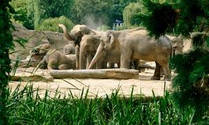 Kölner Zoo: Tageseintritt für einen Erwachsenen in den Kölner Zoo inkl. Aquarium und DIN-A2-Zoo-Poster (44% sparen*)