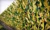 Coon Hollo Corn Maze - Reddick-McIntosh: Child or Adult Season Pass with Access to Corn Maze, Mini Golf, and Hayrides at Coon Hollo Farm (Half Off)