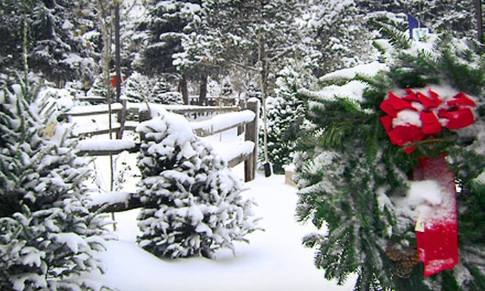 Tree Town Wonderland - Southwest Denver: $20 for $40 Worth of Christmas Trees at Tree Town Wonderland