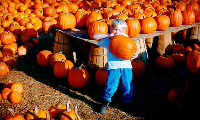 Tate Farms - Moores Mill: $5 for a Pumpkin-Farm Outing at Tate Farms ($10 Value)