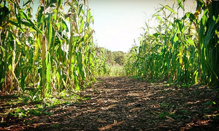 Bowers Farm Corn Maze - Bloomfield Hills: Corn-Maze Entry for Two, Four, or Six at Bowers Farm Corn Maze (Up to 54% Off)