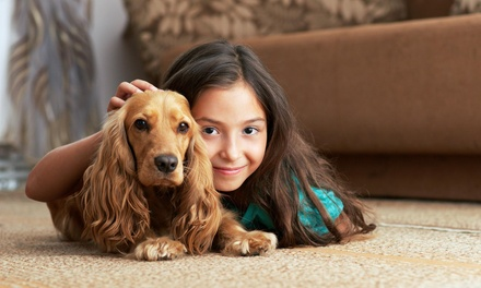 $89 for $450 Worth of Carpet Cleaning at Green Leaf Carpet Cleaning
