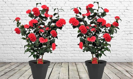 2 of 4 Japanse rozen, naar keuze met decoratieve pot