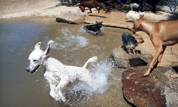Second Home Pet Resort - North Mountain: $30 for a Two-Night Dog Stay in Pavilion Suite ($78 Value) or $21 for a Two-Night Cat Stay in Penthouse Suite ($56 Value) at Second Home Pet Resort