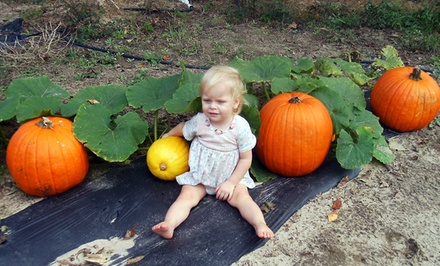 Daytime Pumpkin Patch or Nighttime Haunted Hayride at Graystone Ranch (Up to 56% Off)
