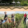 Half Off at Wine Country Trails by Horseback