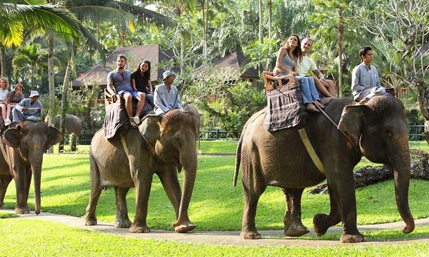Bali: Elephant Ride & Show 0
