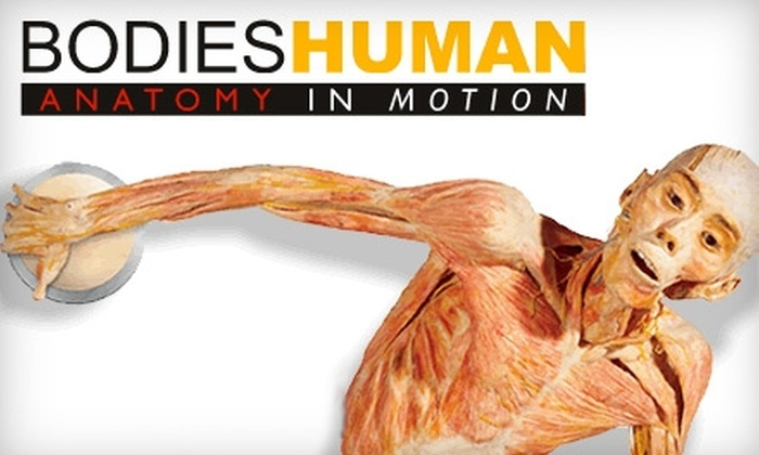 """Bodies Human: Anatomies in Motion - Lubbock: $18 for Two Tickets to """"Bodies Human: Anatomy in Motion"""" (Up to $36 Value)"""