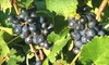 Terrapin Station Winery - 3, Elkton: $15 for Two Winery Tours with Tasting, Souvenir Glasses, and a Box of Wine at Terrapin Station Winery in Elkton ($30 Value)