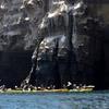 Up to 58% Off Kayak Tours