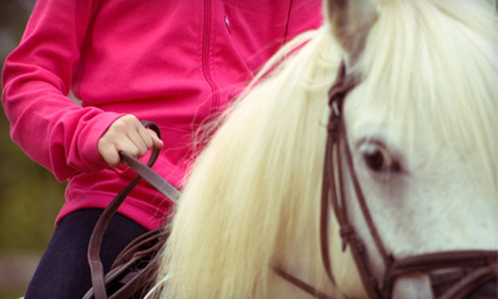 CNY EQ - De Witt: One, Three, or Five Private One-Hour Horseback-Riding Lessons at CNY EQ in DeWitt (Up to 60% Off)