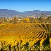 51% Off Wine and Tasting for Four at SpierHead Winery